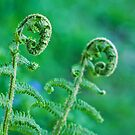 curly ferns.. by Michelle McMahon