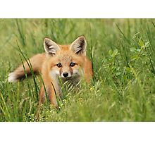 Fox kit Photographic Print