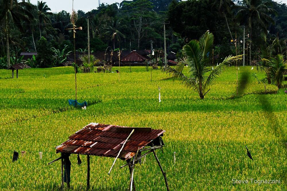 Ubud Rice Fields by Steve Tognazzini