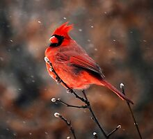 Cardinal in a Snowstorm by Catherine Sherman