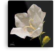 A white flower for a wedding ! Metal Print