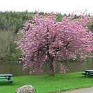 Cherry Blossom,River Barrow,St.Mullins,Co.Carlow,Ireland by Pat Duggan