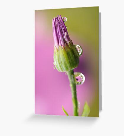 Fragile ~ Greeting Card