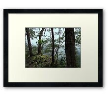 Banksia Point, New England National Park Framed Print