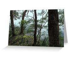 Banksia Point, New England National Park Greeting Card