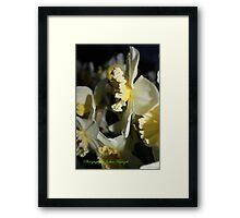 may flower 2011 Framed Print