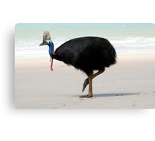 Etty Bay Cassowary 2 Canvas Print