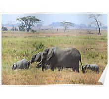 African Elephants, Serengeti, Tanzania.  Poster