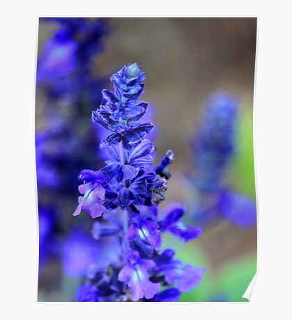 Blue winter / Salie Blou Poster