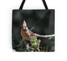 Female northern cardinal perched on a branch Tote Bag