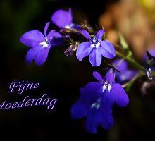Sweet Lobelia - Moederdag by steppeland-2