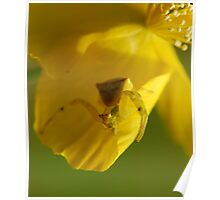 crab spider Poster