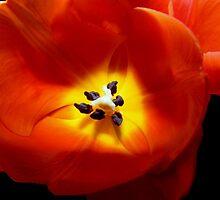 Smooth as silk © by Dawn M. Becker