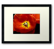 Smooth as silk © Framed Print