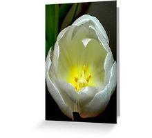 Pure beauty ©  Greeting Card