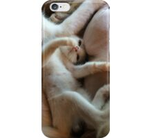 Playful Kitten iPhone Case/Skin