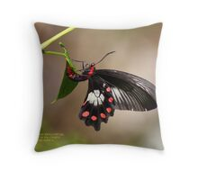 Red bodied swallow-tail Throw Pillow