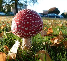 Red Bubble Fungi by DEB CAMERON