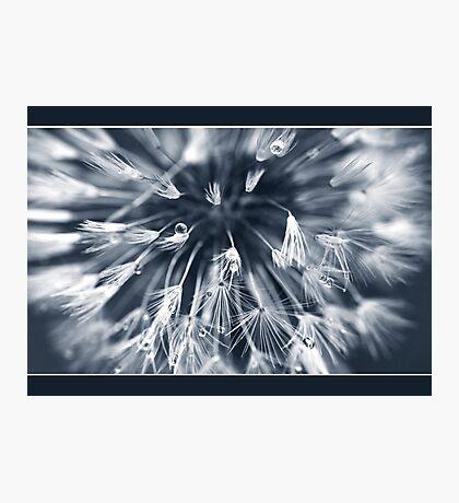 delicious dandelion dew drops Photographic Print