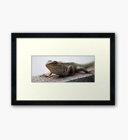 T-REX. Framed Print