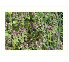Bumble Bee Bumbling Along -11 Art Print