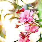 Spring Pink by shirleyglei