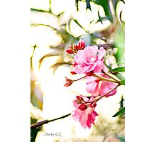 Spring Pink Photographic Print