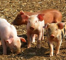happy Little Piglets by IngridSonja