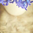 Bella Blue by Lyn  Randle
