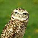 Little Owl by IngridSonja