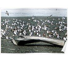 101 Gulls, Cover Shot Poster