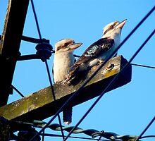 Wired Kookaburras by GraemeR