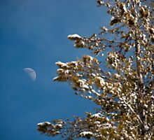 Snowy tree & moon by Kalpesh Patel