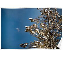 Snowy tree & moon Poster