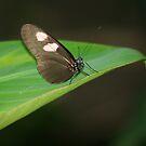 Butterfly & Leaf by Karen K Smith
