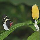 Butterfly & Bloom by Karen K Smith