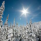 Snowy Whitefish trees by Kalpesh Patel