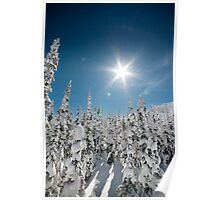 Snowy Whitefish trees Poster