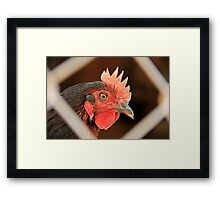 Rooster Through The Fence Framed Print