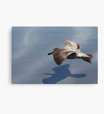 Low Flying Seagull on Doran Beach Canvas Print