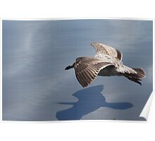 Low Flying Seagull on Doran Beach Poster