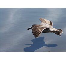 Low Flying Seagull on Doran Beach Photographic Print