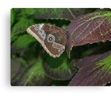Illusive Butterfly Canvas Print