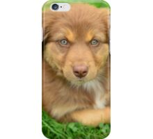 Red Tri Australian Shepherd Puppy - Aussie iPhone Case/Skin