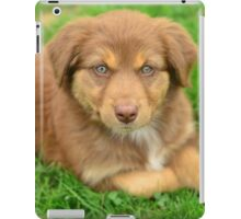 Red Tri Australian Shepherd Puppy - Aussie iPad Case/Skin