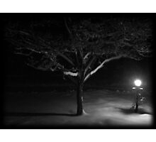 Dogwood Tree and Lamp in the Snow Photographic Print