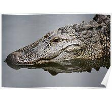 Alligator Reflection Poster