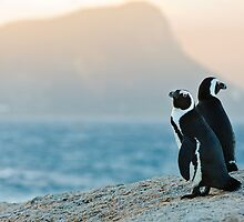Magic hour penguin by Andy-Kim Möller
