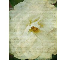 A Musical Rose Photographic Print