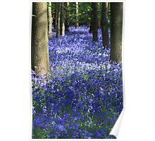 blue floor carpet or rug Poster